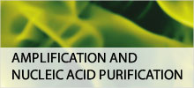 Amplification and Nucleic Acid Purification