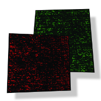 Red and green channel arrays